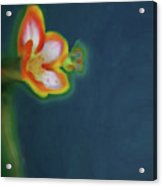 Abstract Floral Art 68 Acrylic Print