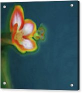 Abstract Floral Art 69 Acrylic Print