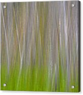 Abstract Forest 2 Acrylic Print
