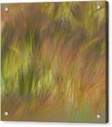 Abstract Grasses Acrylic Print by Ron Hoggard