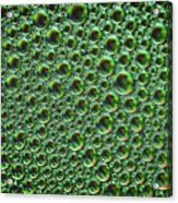 Abstract Green Alien Bubble Skin Acrylic Print