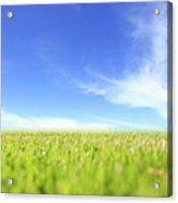 Abstract Green Field And Blue Sky Acrylic Print