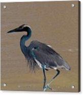 Abstract Heron Art Acrylic Print