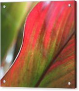 Abstract Leaves Acrylic Print