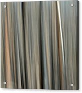 Abstract Lodgepole Pine 2 Acrylic Print