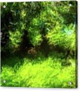 Abstract Nature 834 Acrylic Print