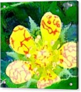 Abstract Of A Wild Buttercup Flower Acrylic Print