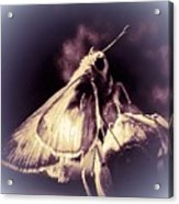 Abstract Of Skipper Butterfly Acrylic Print