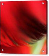 Abstract Poppy 2 Acrylic Print