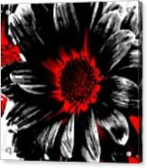 Abstract Red White And Black Daisy Acrylic Print