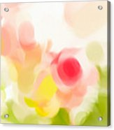 Abstract Roses Acrylic Print by Tom Gowanlock