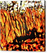 Abstract Saw Grass Iv Acrylic Print