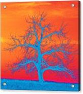 Abstract Single Tree Blue-orange Acrylic Print