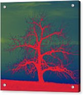 Abstract Single Tree Red-blue-green Acrylic Print
