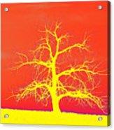 Abstract Single Tree Yellow-orange Acrylic Print