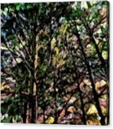 Abstract Trees 691 Acrylic Print