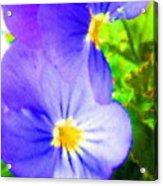 Abstract Violets Acrylic Print