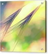 Abstract Weeds Yellow Acrylic Print