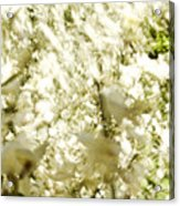Abstract White Acrylic Print