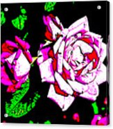 Abstract White Red And Pink Roses Acrylic Print