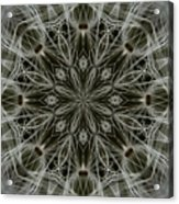Abstract Wildflower 11 Acrylic Print