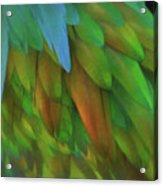 Abstractions From Nature - Pigeon Feathers Acrylic Print