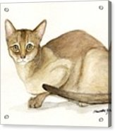 Absyssinian Cat Acrylic Print