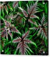 Abundance Of Ferns Acrylic Print