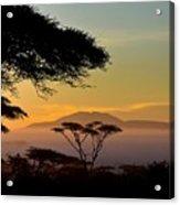 Acacia Land Acrylic Print