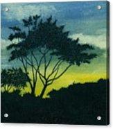 Acacia Tree Acrylic Print