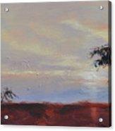 Acacias At Sunset Acrylic Print