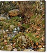 Acadia Fall Foliage Acrylic Print