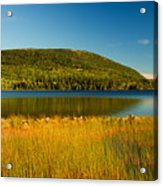 Acadia, National Park Shoreline And Marsh Maine Acrylic Print