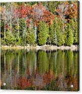 Acadia Tree Reflections Acrylic Print
