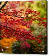 Acer Colors Acrylic Print