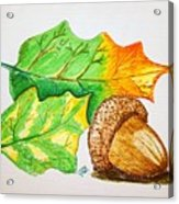 Acorn And Leaves Acrylic Print