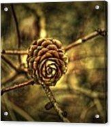 Single Tree Cone At Dusk Acrylic Print