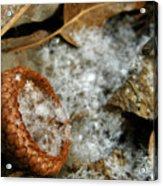 Acorn Cap Filled With Snow Acrylic Print