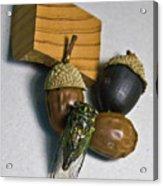 Acrons And Cicada Acrylic Print