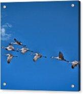 Across An Autumn Sky Acrylic Print