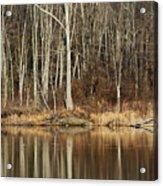 Across Skymount Pond - Autumn Browns Acrylic Print