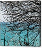 Adagio Dreams Acrylic Print
