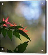 Adding Color To The Holly Acrylic Print