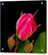 Admirers Acrylic Print
