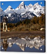 Admiring The Teton Sights Acrylic Print
