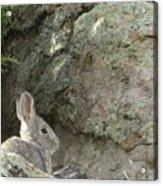 Adobetown Bunny Acrylic Print