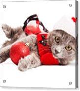 Adorable Christmas Kitten Over White Acrylic Print