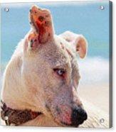 Adorable Small Dog On The Beach Acrylic Print