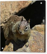Adorable Up Close Look Into The Face Of A Squirrel Acrylic Print