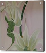 Aeranthes Peyrot Orchide Acrylic Print